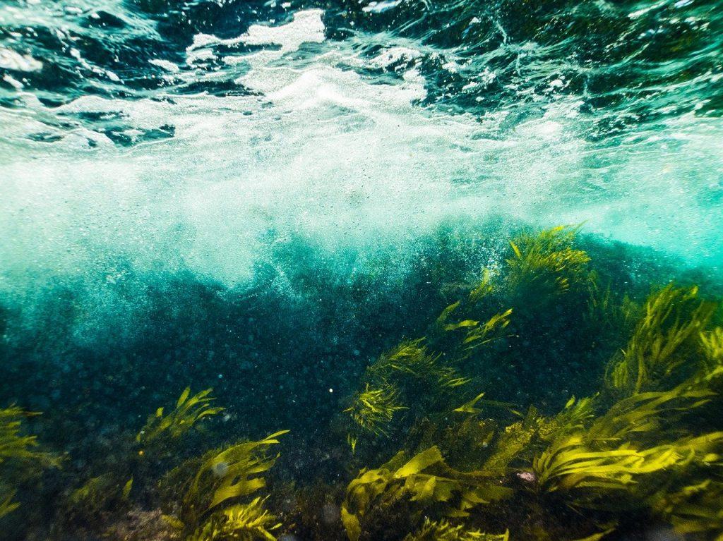 Морские травы Белого моря: в Зоологическом музее покажут заключительный фильм кинофестиваля. Фото: pixabay.com