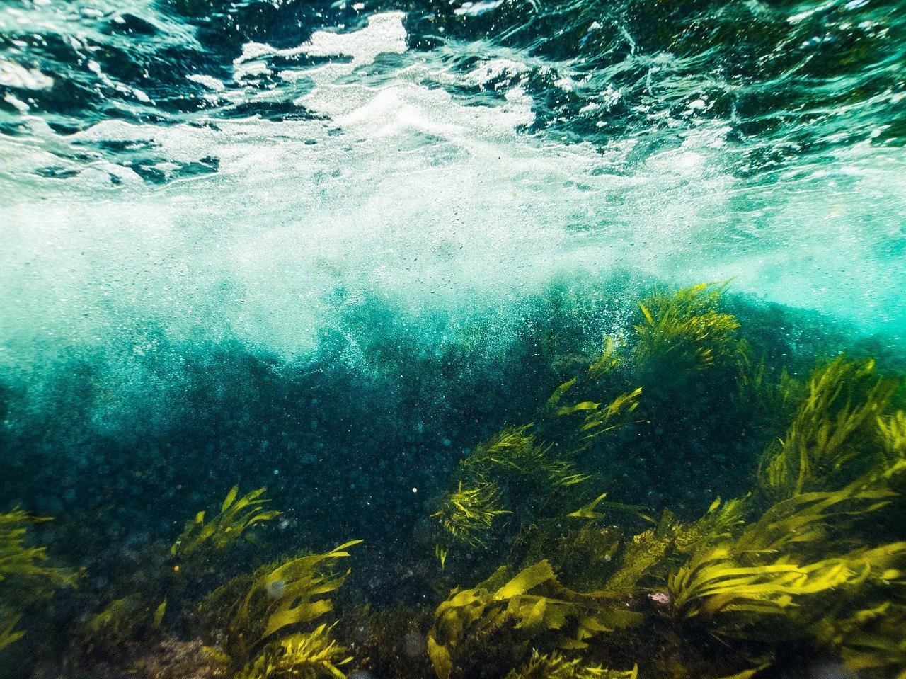 Морские травы Белого моря: в Зоологическом музее покажут заключительный фильм киновестиваля. Фото: pixabay.com
