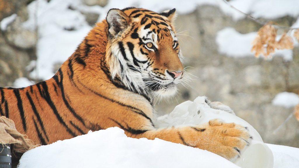 Акции и сюрпризы подготовили для посетителей в честь дня рождения Московского зоопарка. Фото: сайт мэра Москвы