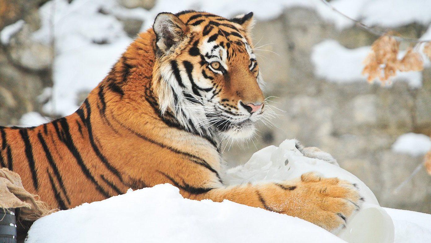 День рождения отметили в Московском зоопарке. Фото: сайт мэра Москвы