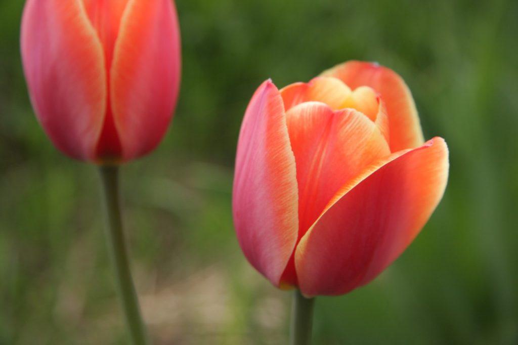 Волонтеры раздадут москвичкам более 300 тысяч цветов 8 марта