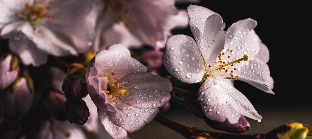 Цветение продолжается: «Репетицию весны» в Ботаническом саду Московского университета продлили