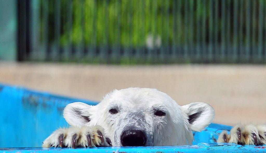 Режим работы Московского зоопарка изменили