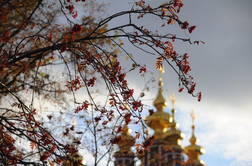 Петр Бирюков: 17 «оазисов» появится на дорогах Москвы осенью