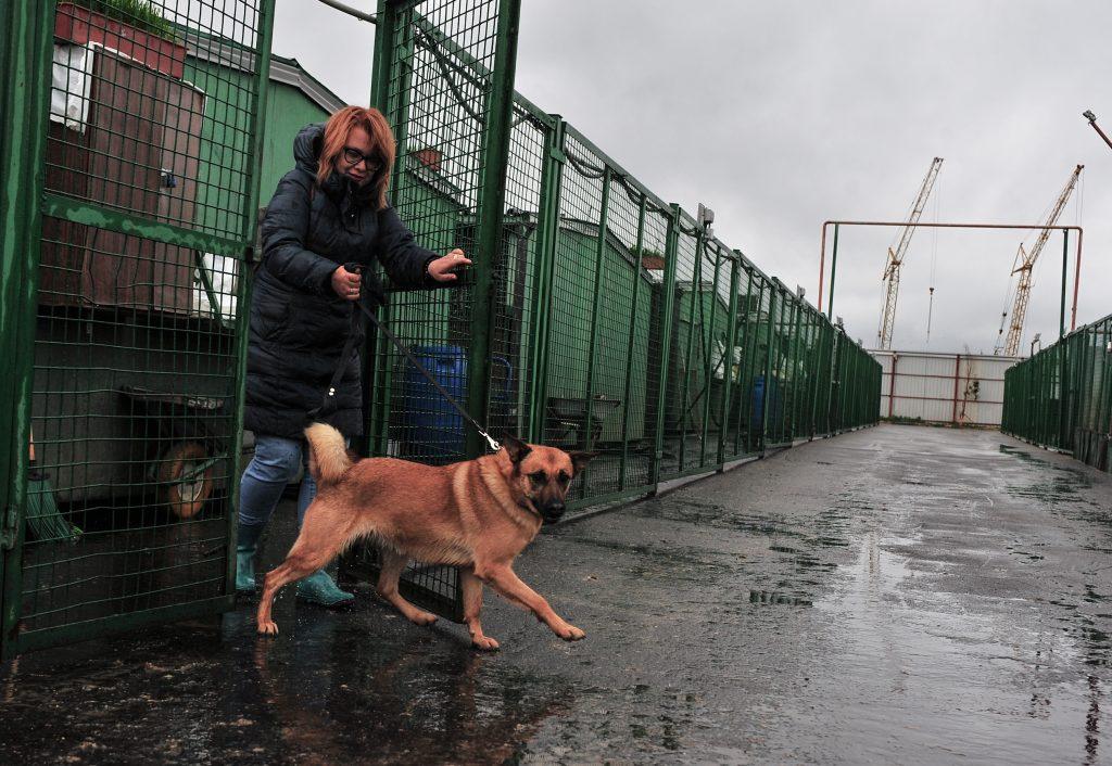 Около 17 тысяч кошек и собак ждут своих хозяев в столичных приютах для животных