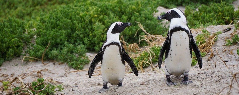 Гумбольдты переехали на дачу: пингвины Московского зоопарка поменялись вольерами