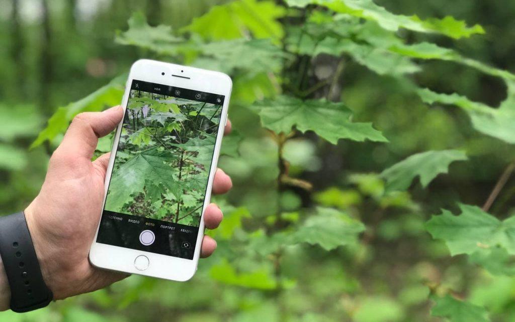 Виртуальный ботаник: новый проект запустят на платформе «Аптекарского огорода»