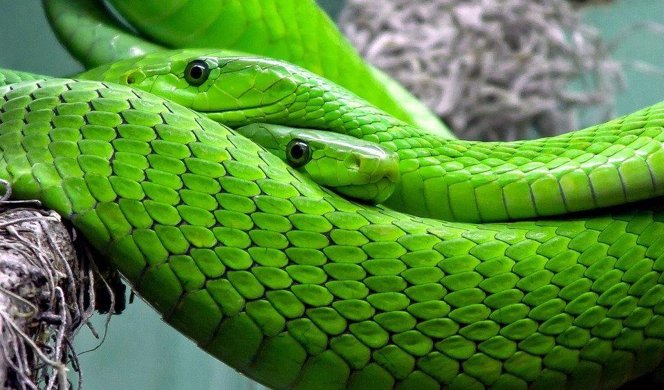 Ящерицы и змеи: юные москвичи смогли потрогать пресмыкающихся в Биомузее