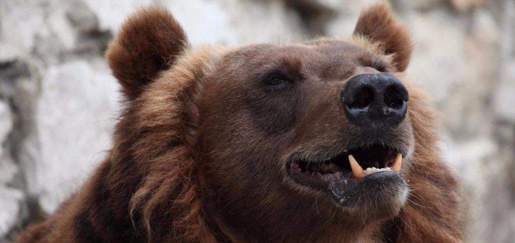 Медведям Московского зоопарка приготовили ледяные угощения из-за жары
