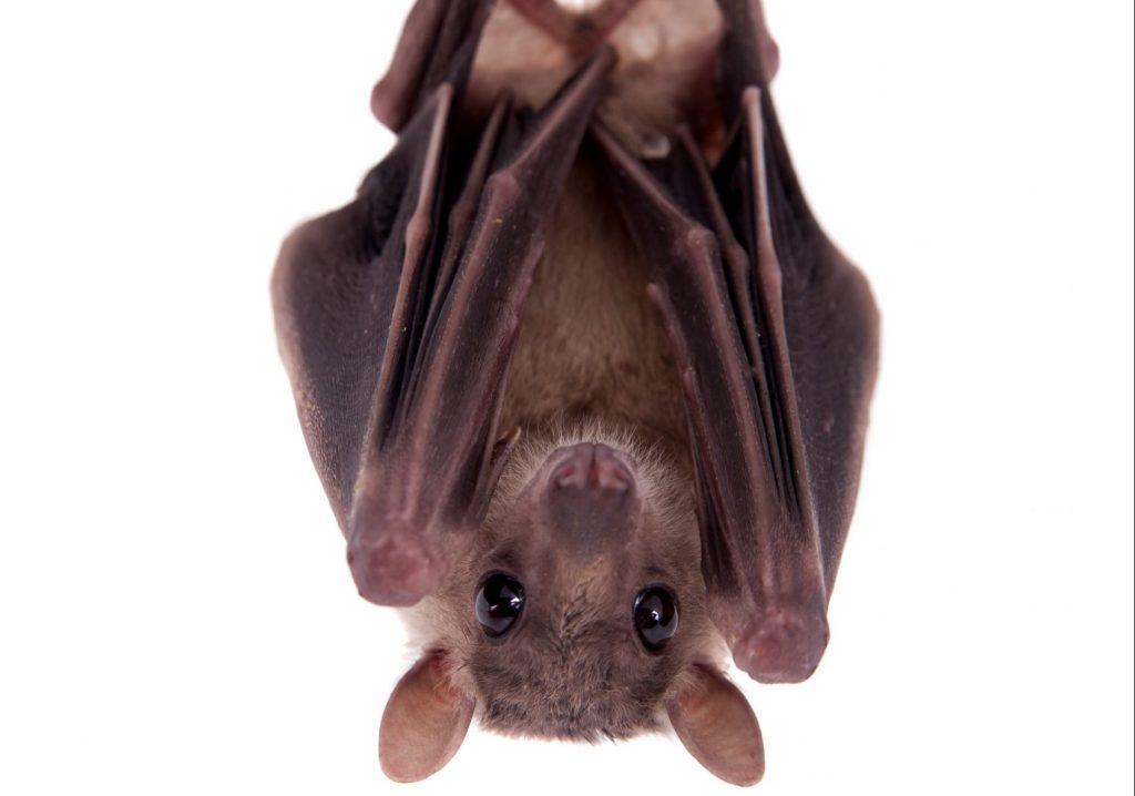 Летучим мышкам нужна помощь