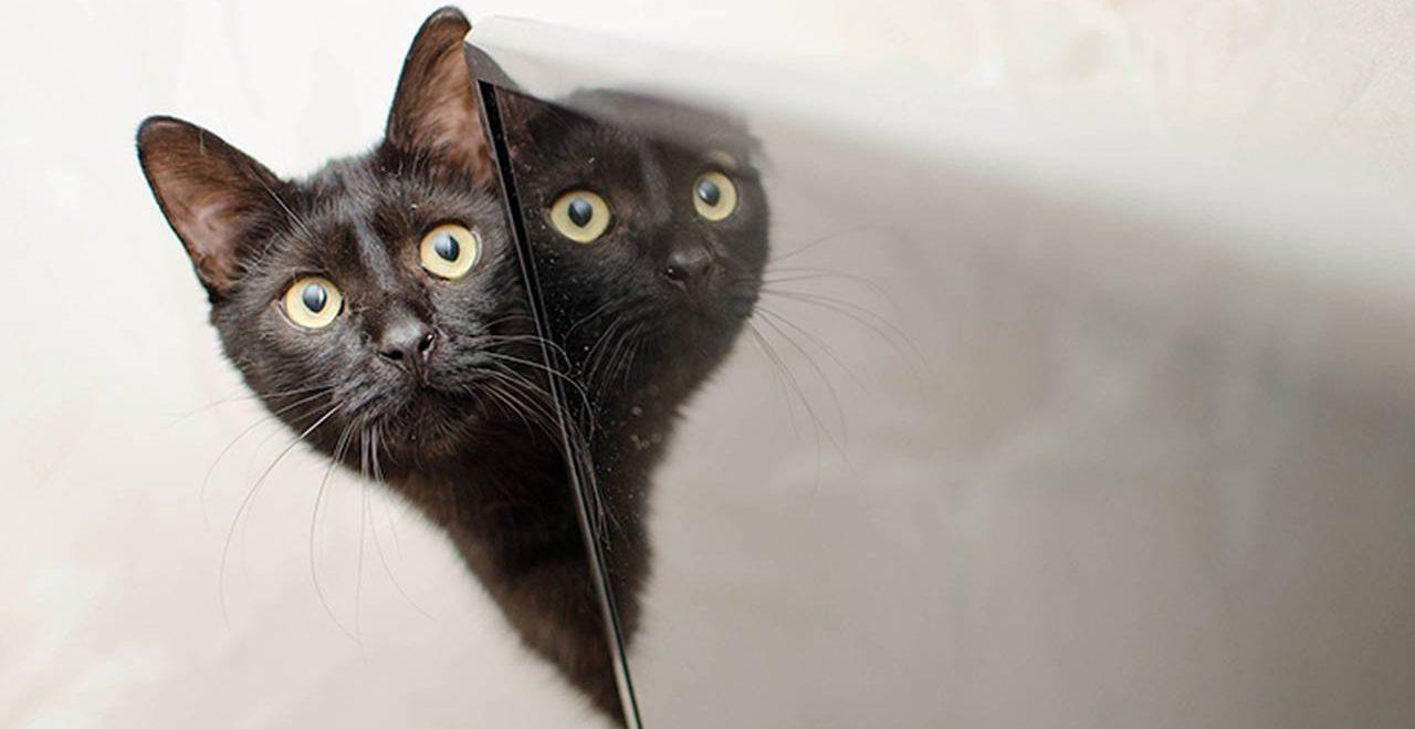 Развлекательная программа «Будь котиком» состоится в «Гайдаровке». Фото: pixabay.com