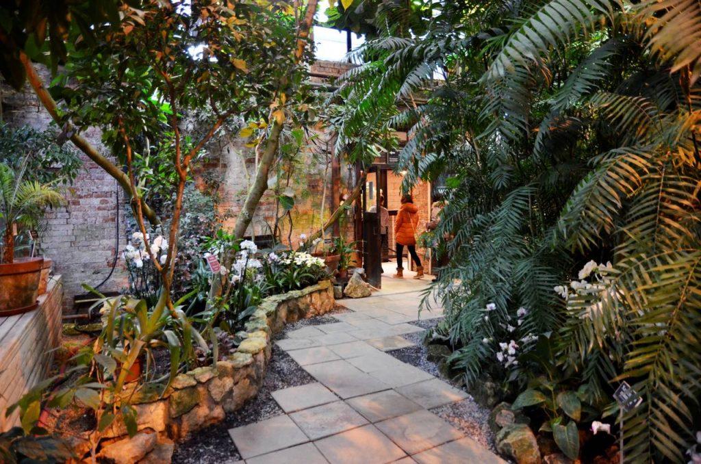 Финальная экскурсия по саду лекарственных растений состоится в «Аптекарском огороде»