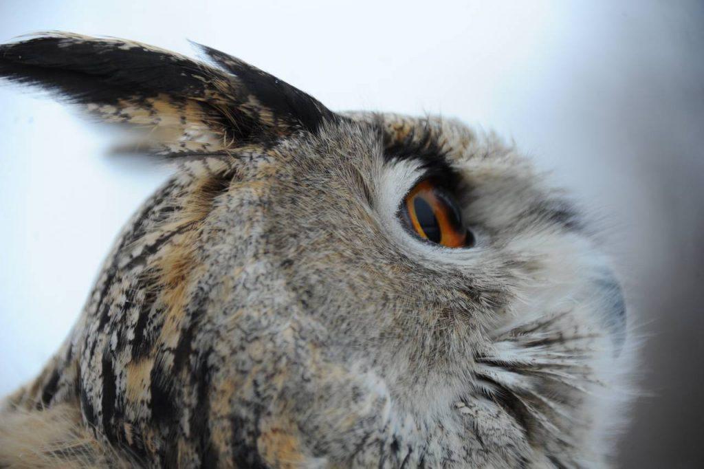 Специалисты Мосприроды попросили не беспокоить птиц. Фото: Светлана Колоскова, «Вечерняя Москва»