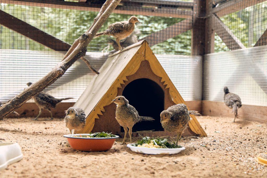Птичий детский сад