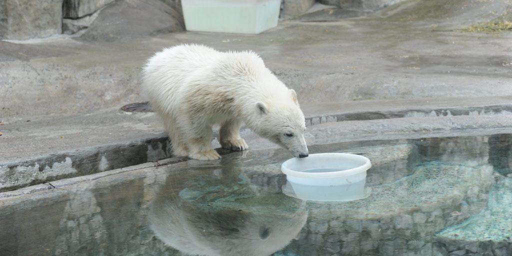 Режим работы Московского зоопарка изменился