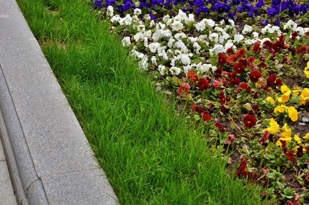 Озеленение завершили во дворе района Хамовники