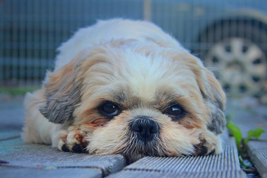 Человек собаке друг: акцию запустили представители центра «Замоскворечье»