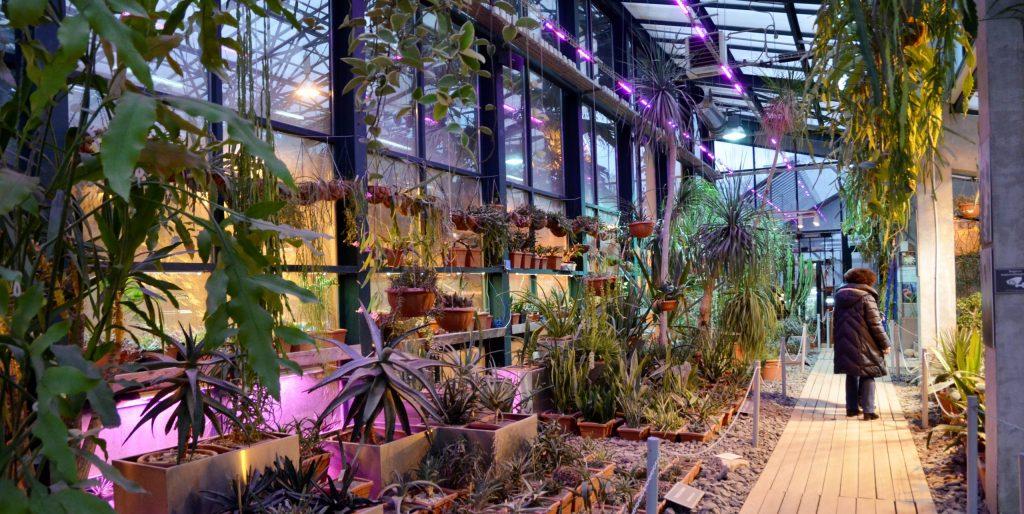 Растения будут очищать воду в «Аптекарском огороде»