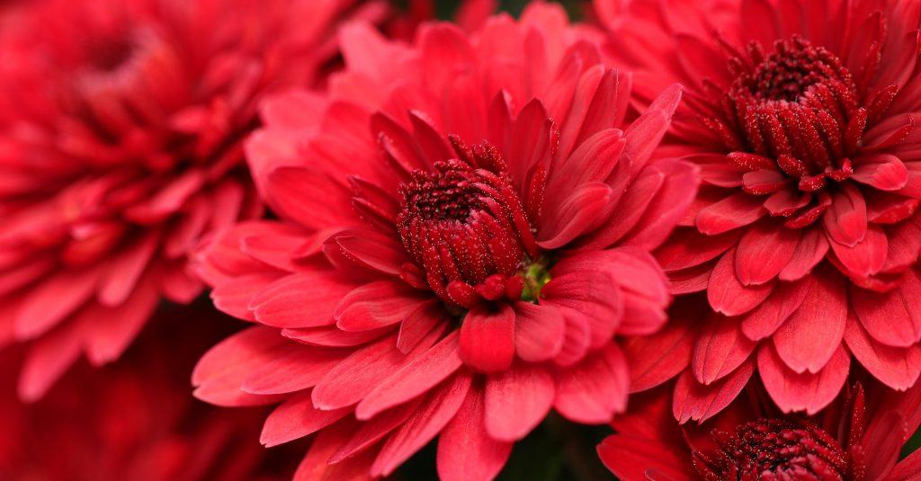 Выставку осенних цветов откроют в Биомузее