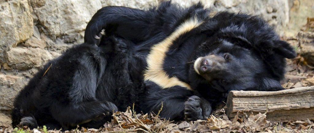 Жителей Московского зоопарка начали готовить к зиме