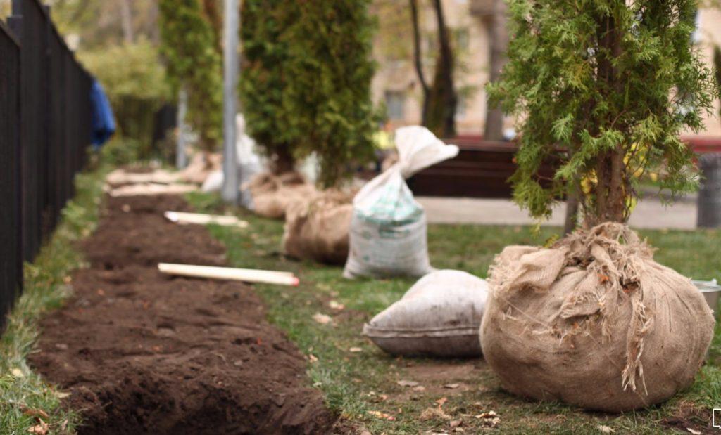 Около двух тысяч деревьев и кустарников высадят в Пресненском районе