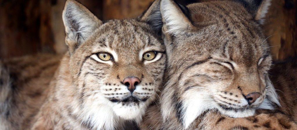Зима близко: животных Московского зоопарка начали переводить в теплые вольеры